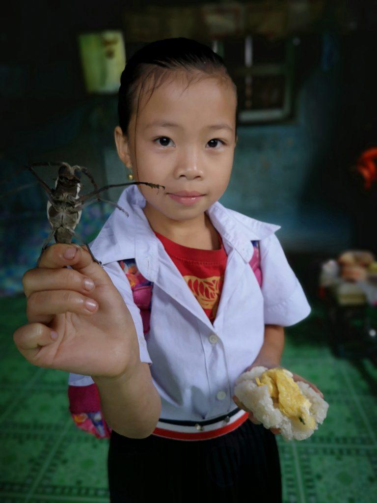 Laos: insekty - Insekt znaleziony w domu mieszkankę Laosu.