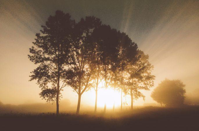 Wschód słońca w Hiszpanii. Poranne promienie przebijające się przez drzewa- sunrise in spain
