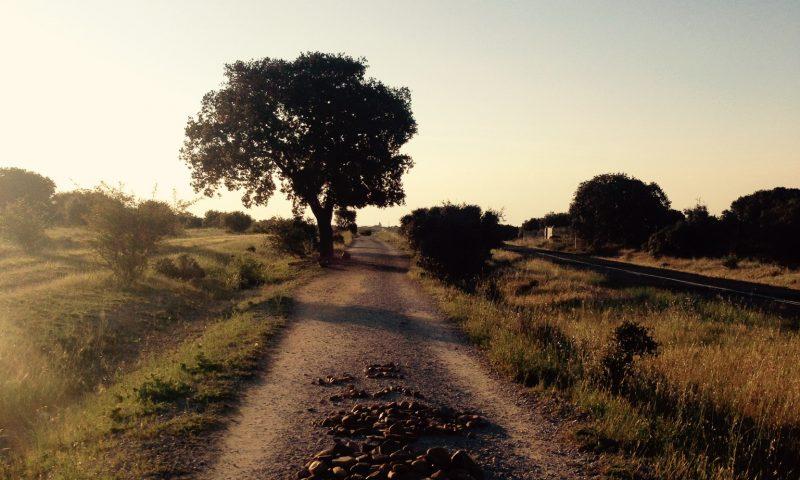 Z Leon do Santiago de Compostela - Camino Frances - droga św. Jakuba