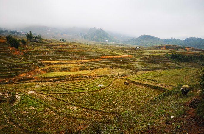 Północny Wietnam w listopadzie - trekking w Sa Pa
