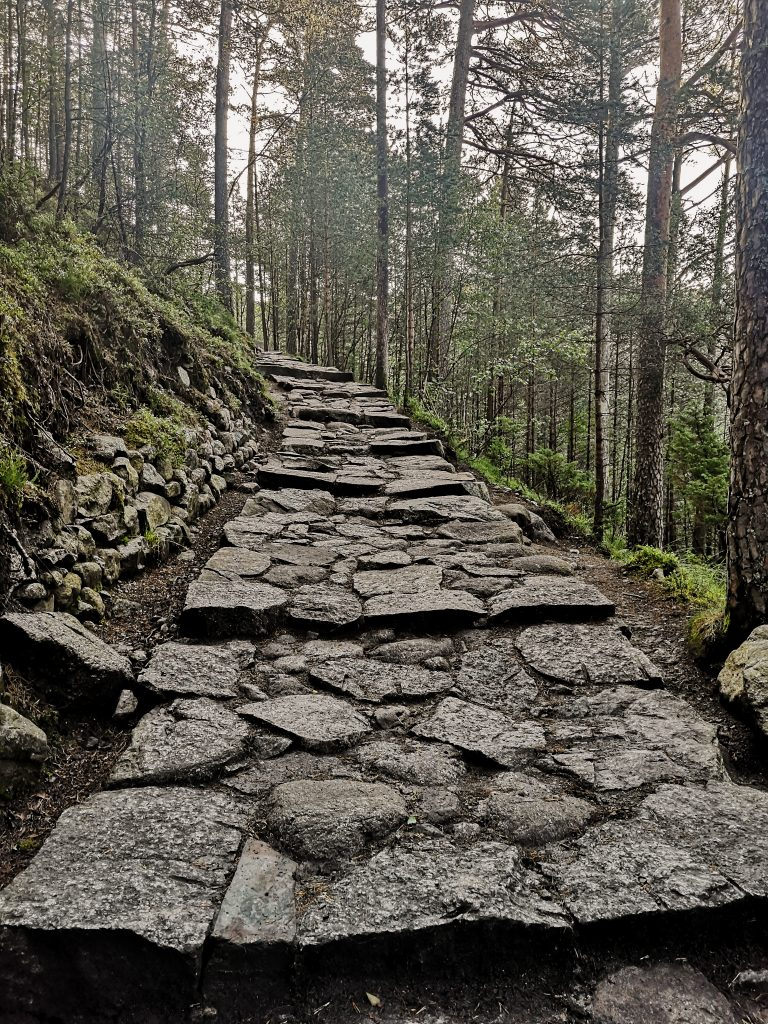 Trekking w górach w Norwegii, trekking w lesie. Nature of Norway