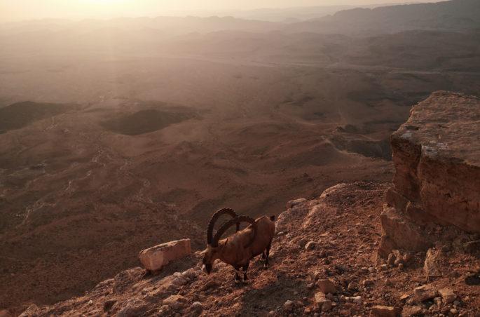 Co zobaczyć w Izraelu? Pustynia Negew i widok na krater w Mitzpe Ramon. Capricorn in Israel